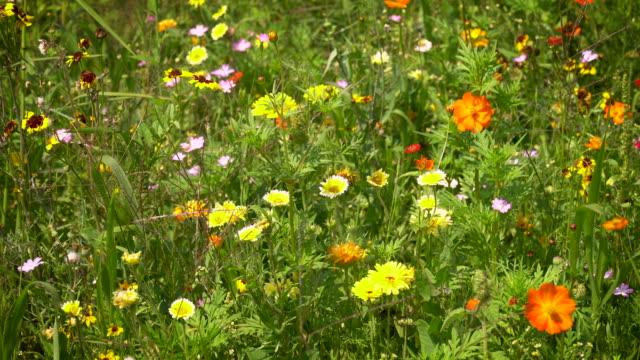 summer meadow wildflowers - meadow stock videos & royalty-free footage