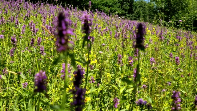 Summer meadow with flowers and insects in full beauty