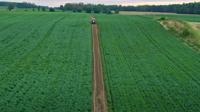 summer on the farm. potato field. tractor moving in background - red potato stock videos & royalty-free footage