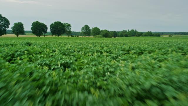 summer on the farm. potato field - red potato stock videos & royalty-free footage