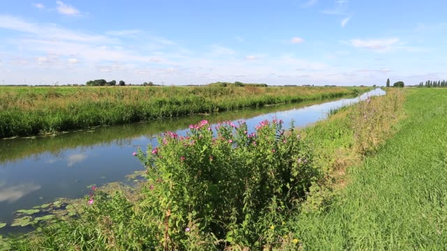 summer over a fenland drain waterway, cambridgeshire fens, england, uk - fen stock videos and b-roll footage