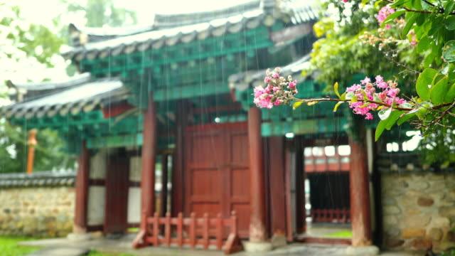 vidéos et rushes de summer rain falling on flower in jeonju hanok village / jeonju-si, jeollabuk-do, south korea - plaque de montage fixe
