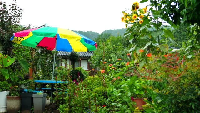 vidéos et rushes de summer rain falling over jeonju hanok village / jeonju-si, jeollabuk-do, south korea - plaque de montage fixe