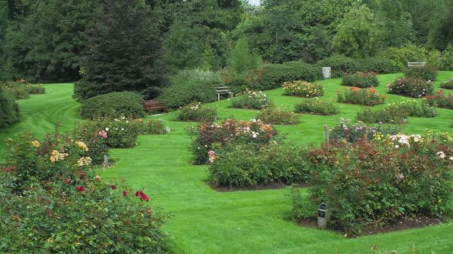 vidéos et rushes de jardin d'été rose - parterre de fleurs