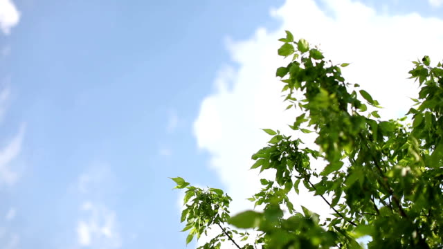 summer sky and leaves - tree stock videos & royalty-free footage