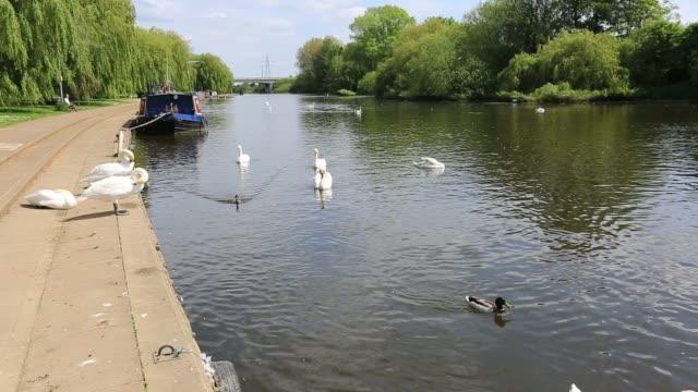 Summer view of the river Nene embankment, Peterborough, Cambridgeshire, England.