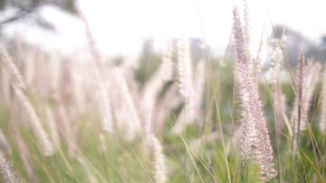Summer wild meadow