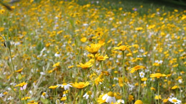 Summer wild yellow  flower