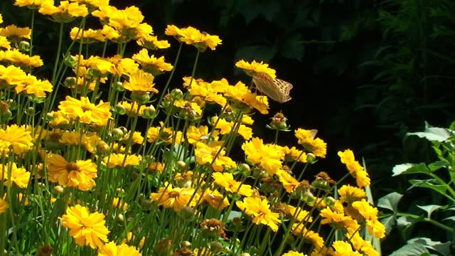 夏ます。黄色の花畑 - 動物の色点の映像素材/bロール