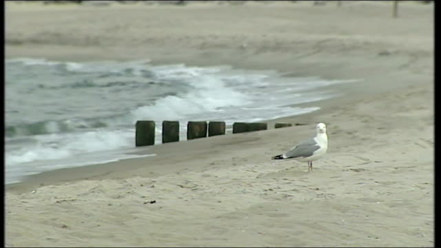 vidéos et rushes de focus on russia relations and climate change seagull preening on sand and people sitting in covered deckchairs - se lisser les plumes