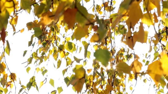 Sonne und Zweige mit Birke Blätter.