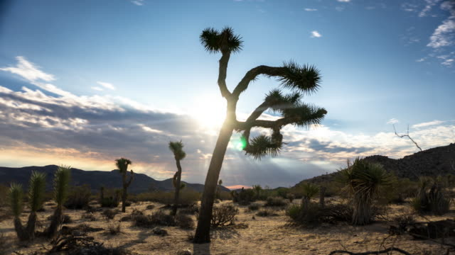 Sun and Cloud Over Joshua Tree - Time Lapse
