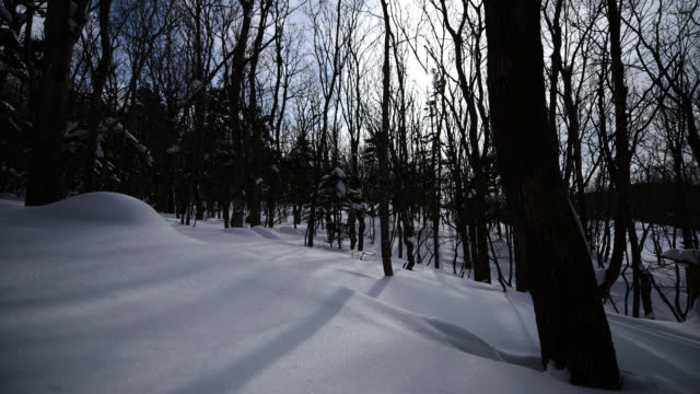 sun and clouds pass over snowy woodland. - 30 seconds or greater stock videos & royalty-free footage