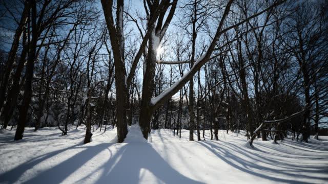 stockvideo's en b-roll-footage met sun and clouds pass over snowy woodland. - tijdopname