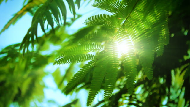 太陽と緑の葉 - 木漏れ日点の映像素材/bロール