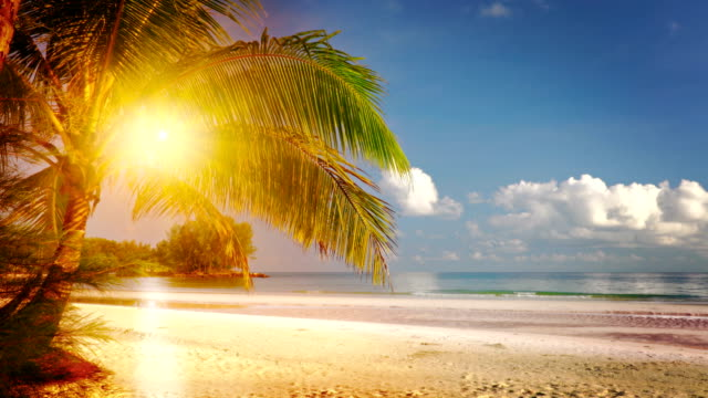 sun and palm tree. beach - coconut palm tree stock videos & royalty-free footage