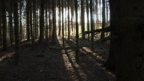 vídeos y material grabado en eventos de stock de t/l sol detrás de coniferous árboles - sombra