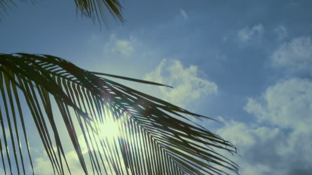 CU, sun behind palm leaf in wind / Sanibel, Florida, USA