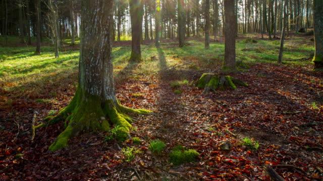 t /l 太陽の裏の木々 - 影のみ点の映像素材/bロール
