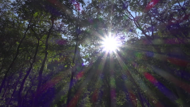 sun behind tree at forest sliding shot - tropical tree stock videos & royalty-free footage
