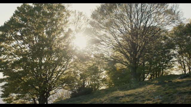 sun behind trees on hill in wind - anhöhe stock-videos und b-roll-filmmaterial