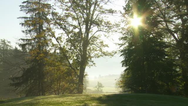 HD Sun Clearing Morning Mist in Autumn Landscape
