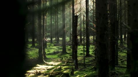 vídeos y material grabado en eventos de stock de sol que viene a través de los árboles - sweden
