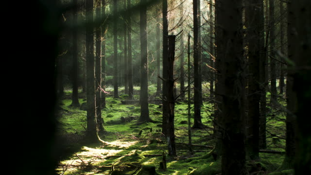 sun coming through the trees - woodland stock videos & royalty-free footage
