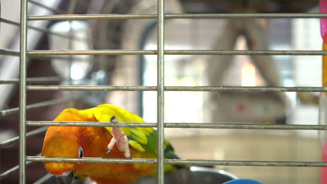 sun conure in cage at home - animal body part stock videos & royalty-free footage