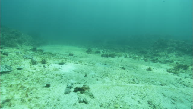 vidéos et rushes de sun dapples a shallow seabed in the great barrier reef. - fonds marins
