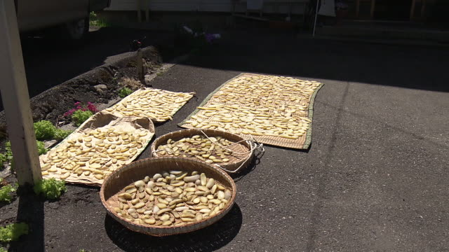 sun drying sweet potatos, fukushima, japan - bamboo plant stock videos & royalty-free footage