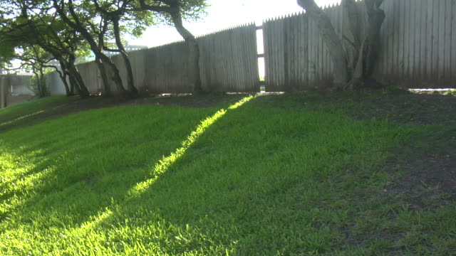 ms, sun filtering through fence of grassy knoll, dealey plaza, dallas, texas, usa - john f kennedy video stock e b–roll