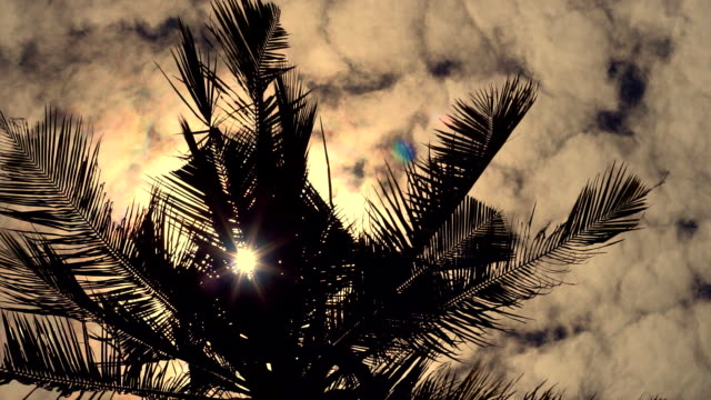 sun flare through coconut palm tree, ko lanta, thailand - ko lanta stock videos & royalty-free footage