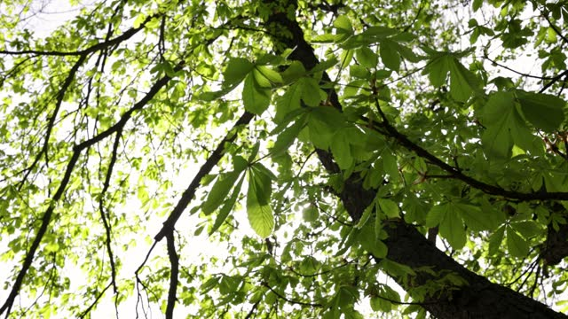sun flares through leaves - treetop stock videos & royalty-free footage