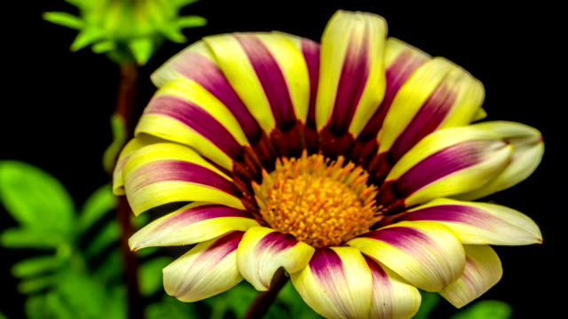 sun flower - floral pattern stock videos and b-roll footage
