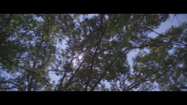 la, pan, sun from behind trees - letterbox format stock videos & royalty-free footage