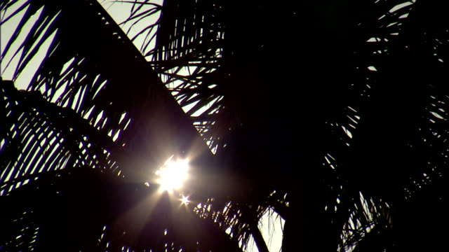 sun glare sun rays shinning through silhouette of palm tree leaves - blattfiedern stock-videos und b-roll-filmmaterial
