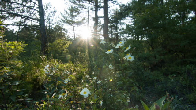 sun gleams beautifully through the forest time lapse - spiral staircase stock videos & royalty-free footage