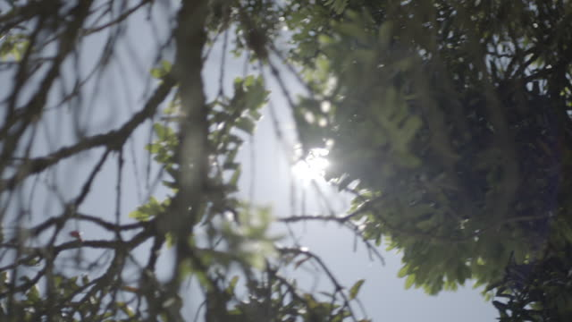 stockvideo's en b-roll-footage met sun glints through trees - laag camerastandpunt