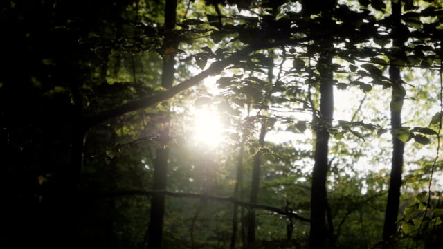 Sun in a Forest Slow Motion