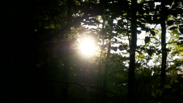sun in a forest - back lit stock videos & royalty-free footage