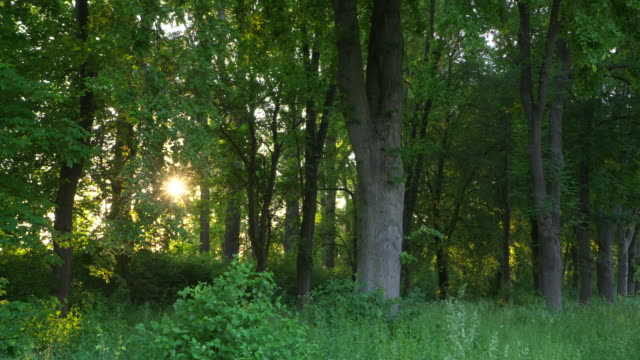 sun in forest. bavaria, germany. - tree trunk stock videos & royalty-free footage