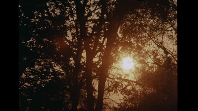 stockvideo's en b-roll-footage met sun in orange sky sunset trees branches leaves in silhouette ms zi male scientist writing equation underneath 'subsolar surface' 'convection'... - schoolbord