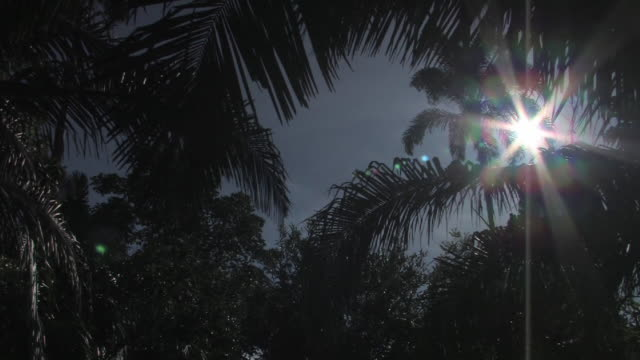 LA MS sun in overcast sky shining through silhouettes of rainforest trees/ Manu National Park, Peru