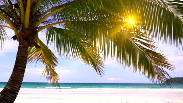 sonne in palme strand - lagune stock-videos und b-roll-filmmaterial