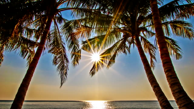 sun in palm tree - exoticism stock videos & royalty-free footage