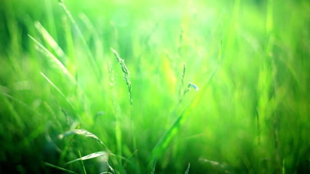 sun in the grass - soft focus stock videos & royalty-free footage