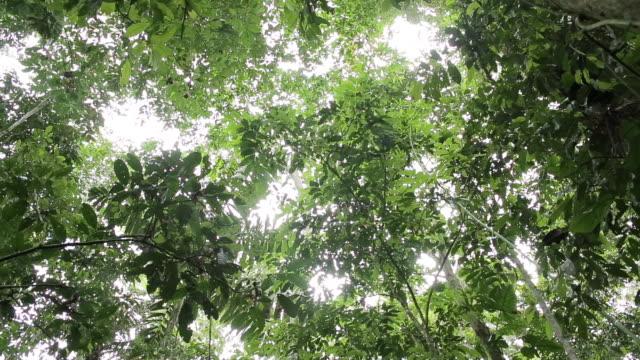 vídeos y material grabado en eventos de stock de sun light shines through rain forest canopy - parra