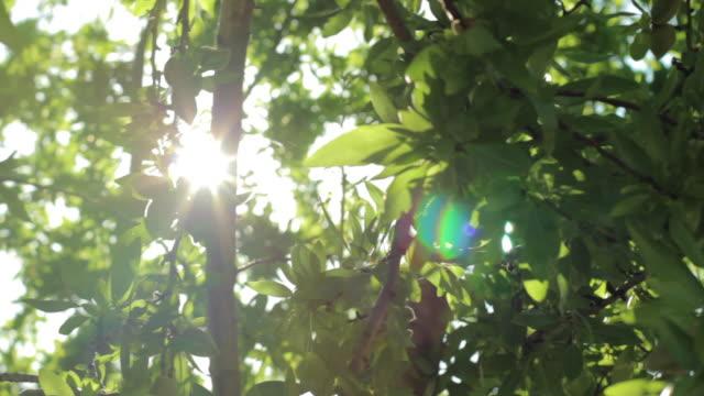 Sun lights between almonds