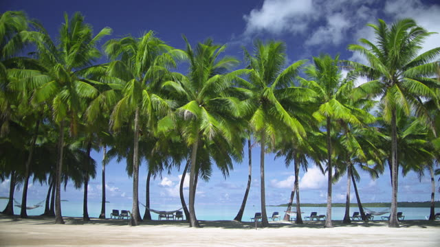 ws, sun loungers and hammocks between palm trees at sandy tropical beach, aitutaki lagoon, aitutaki, cook islands - aitutaki lagoon stock videos & royalty-free footage